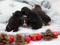 1TagPuppies1klein