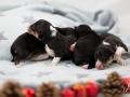 1TagPuppies2klein