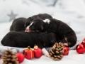 1TagPuppies3klein
