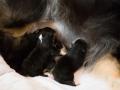 1TagPuppies6klein