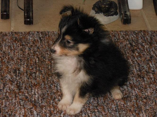 Diego as a puppy