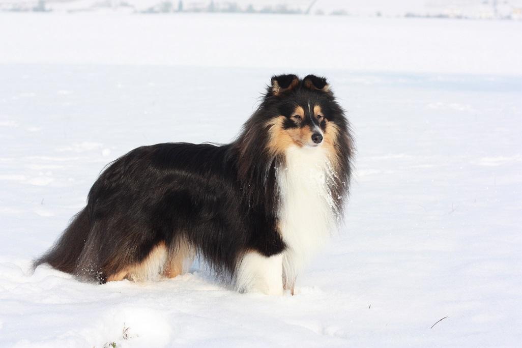 Diego im Schnee
