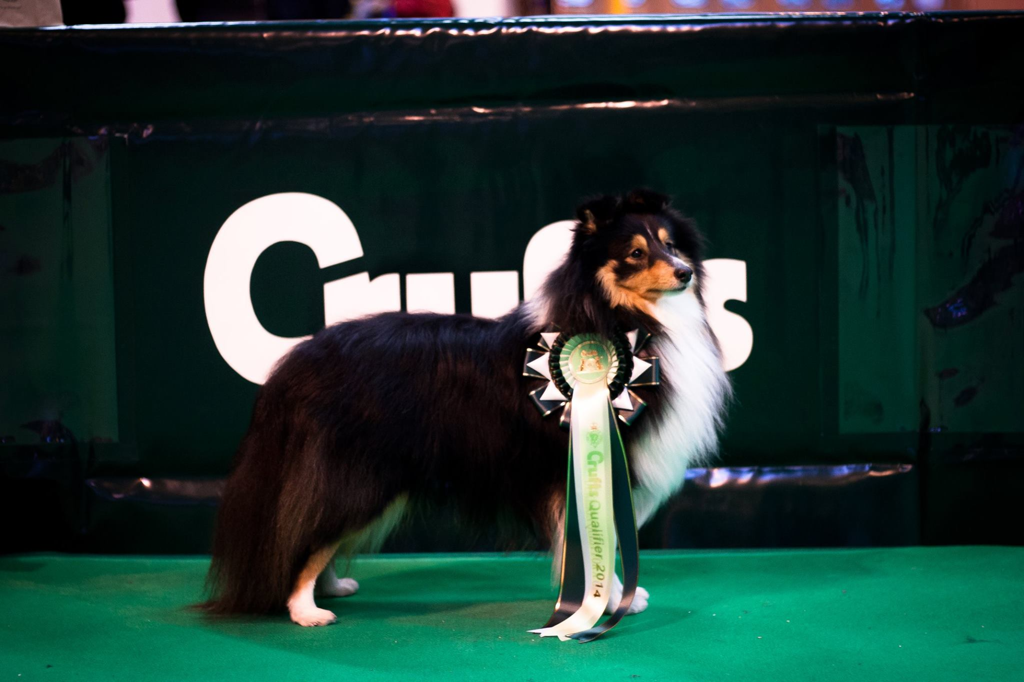 Our trip to Crufts