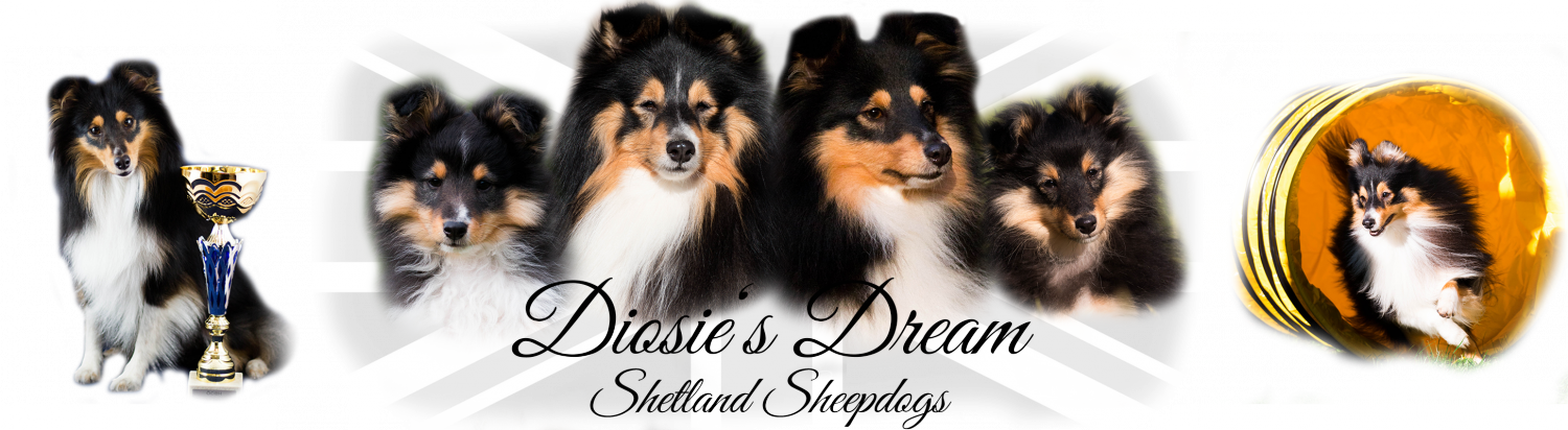 Diosies Dream Shetland Sheepdogs